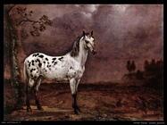potter paulus  Cavallo maculato