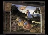 Rosselli Cosimo 504