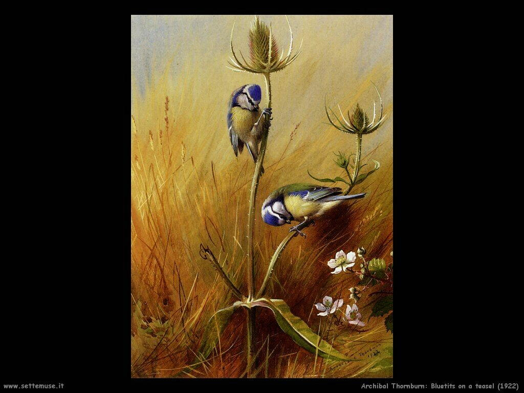 thornburn archibald   bluetits_on_a_teasel_1922