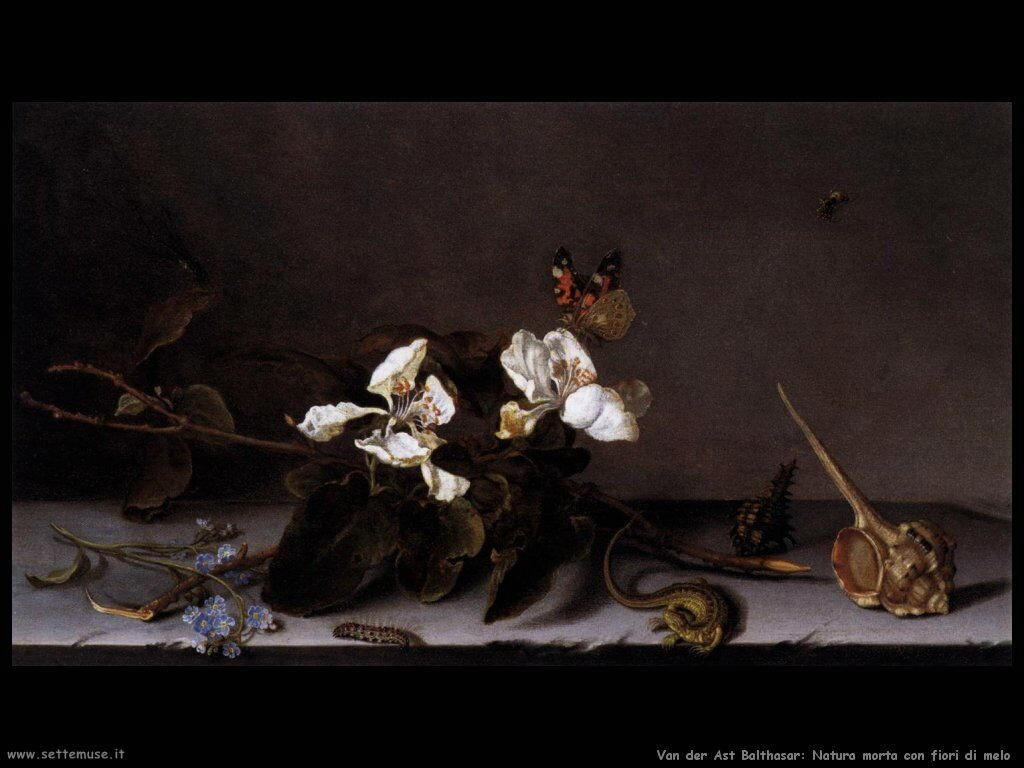 Natura Morta con fiori di melo Van Der Ast Balthasar