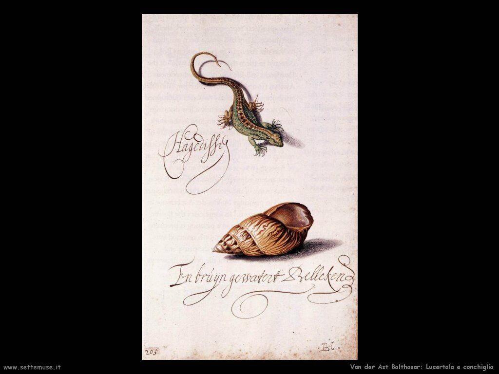 Lucertola e conchiglia Van Der Ast Balthasar