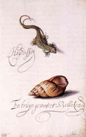 Illustrazione di Van der Ast Balthasar