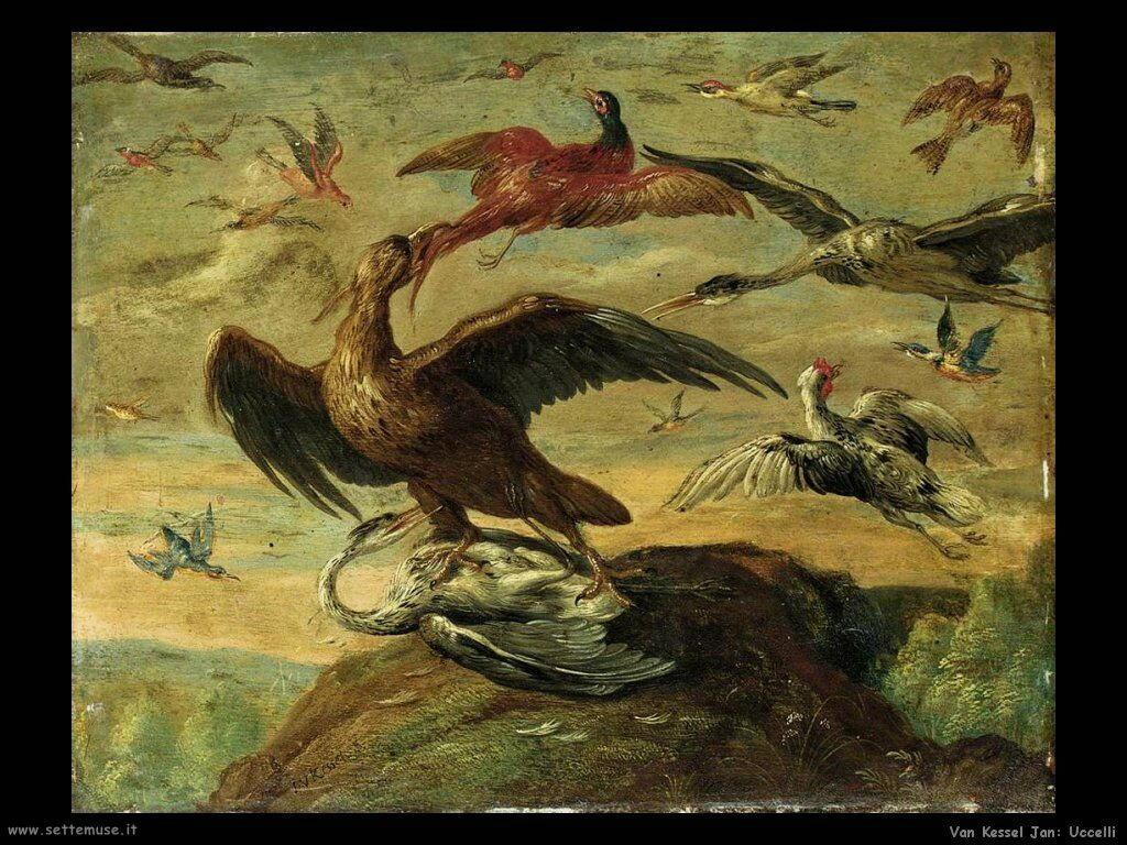 Uccelli Van Kessel Jan