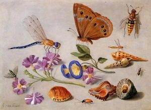 Disegni di Jan van Kessel