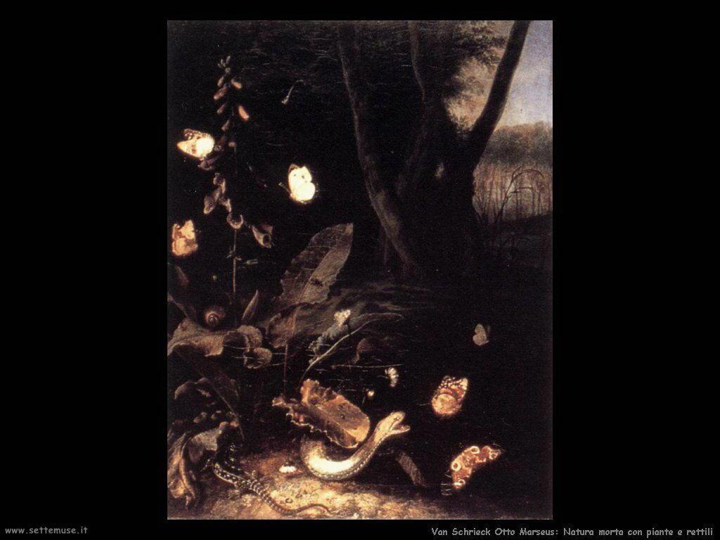 Van Schrieck, Otto Marseus Natura morta con piante e rettili