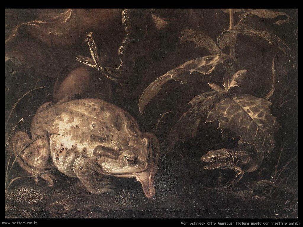 Van Schrieck, Otto Marseus Natura morta con insetti e anfibi