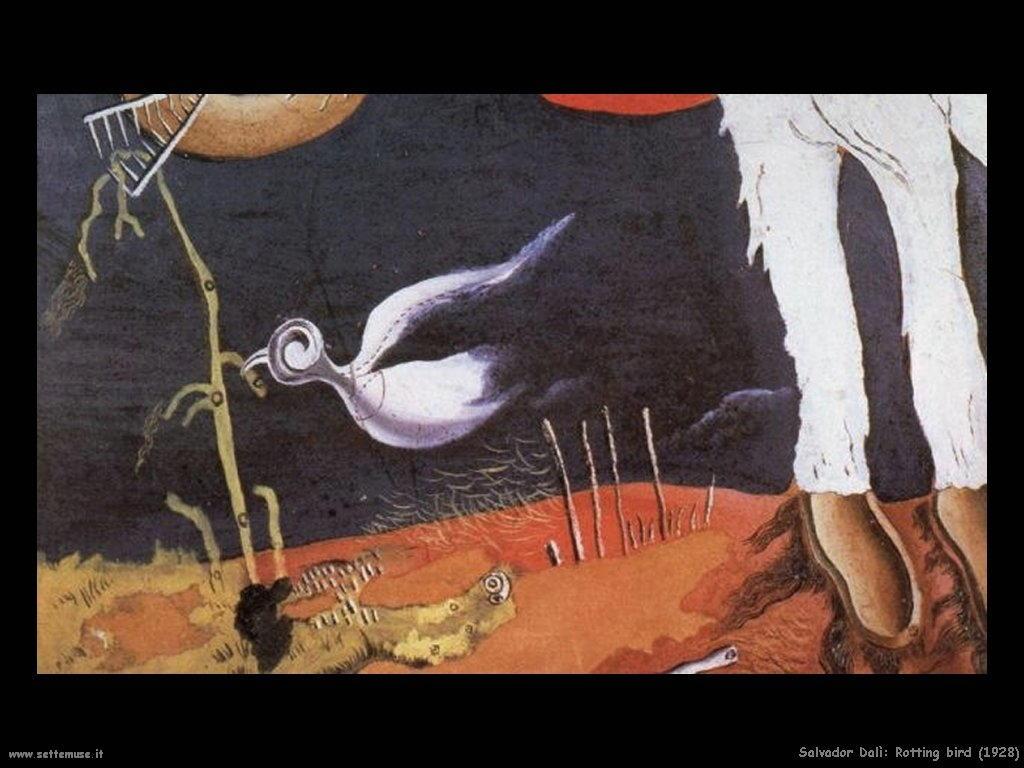 Salvador Dalì_rotting_bird