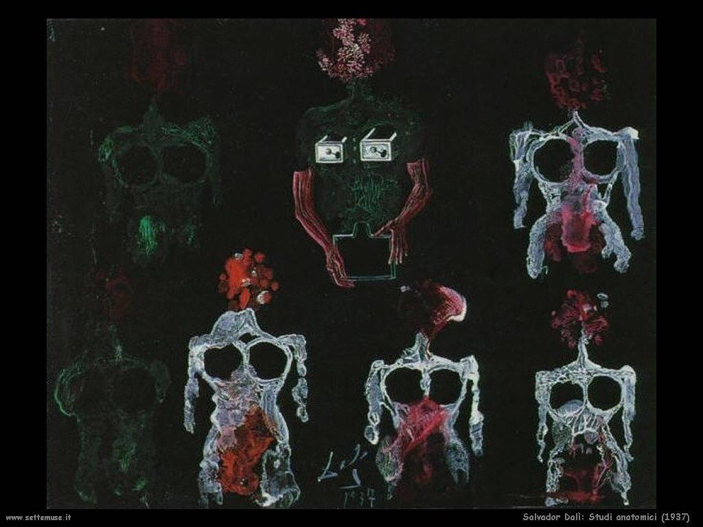 Salvador Dalì studi_anatomici