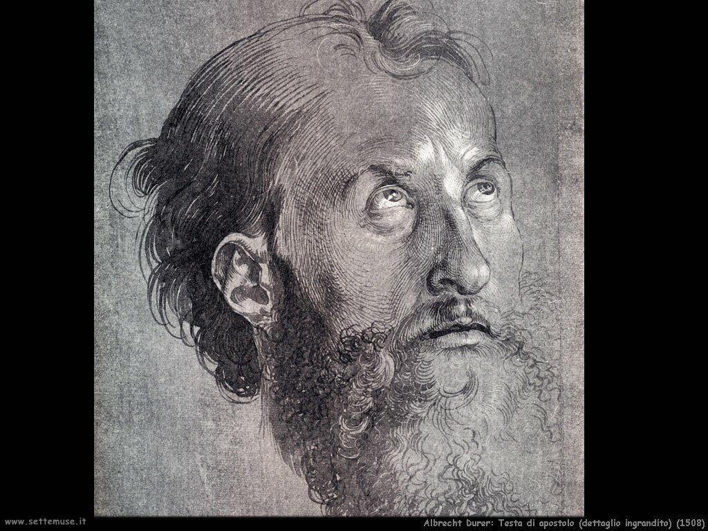 Testa di apostolo rivolta in alto (1508)