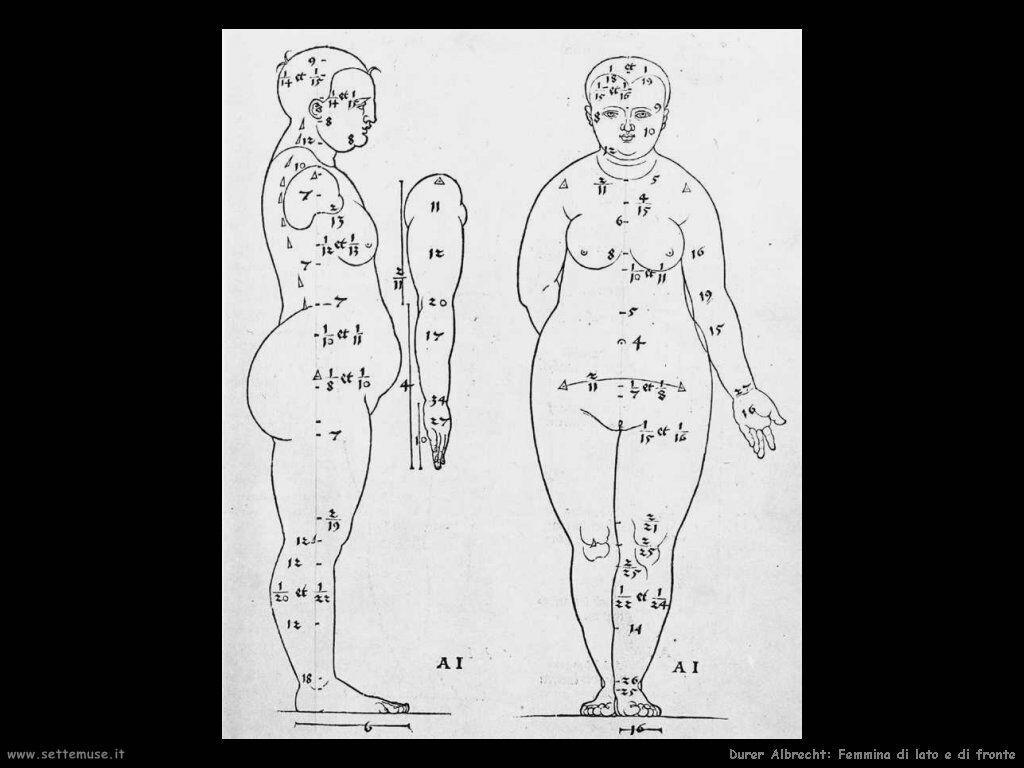 Femmina di lato e frontale - Durer
