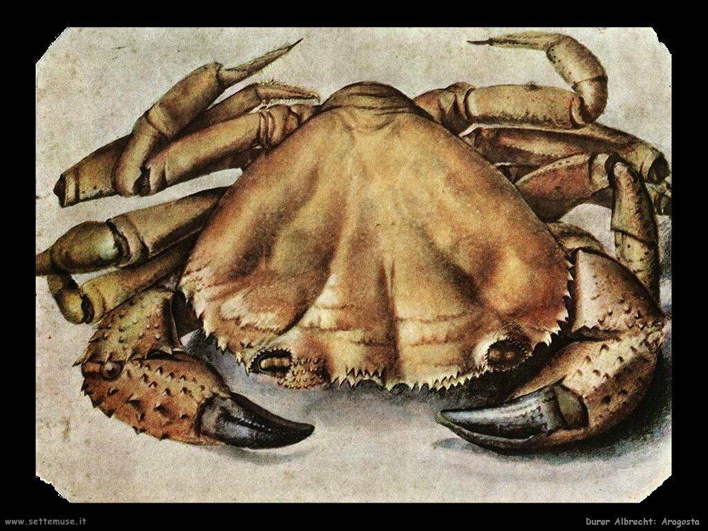 Aragosta (granchio) - Durer