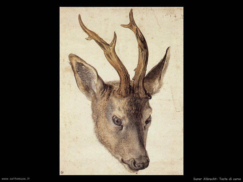 Testa di cervo - Durer