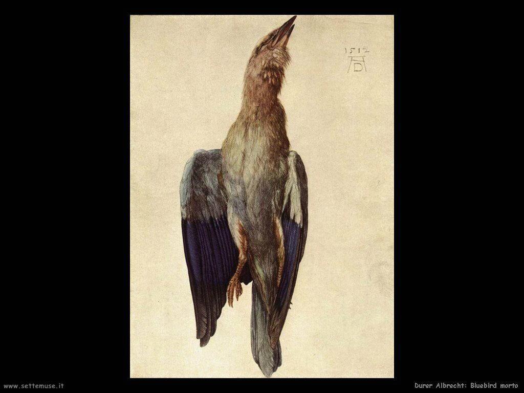 Bluebird morto