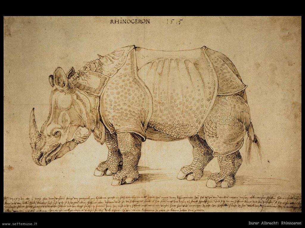Rhinoceros - Durer