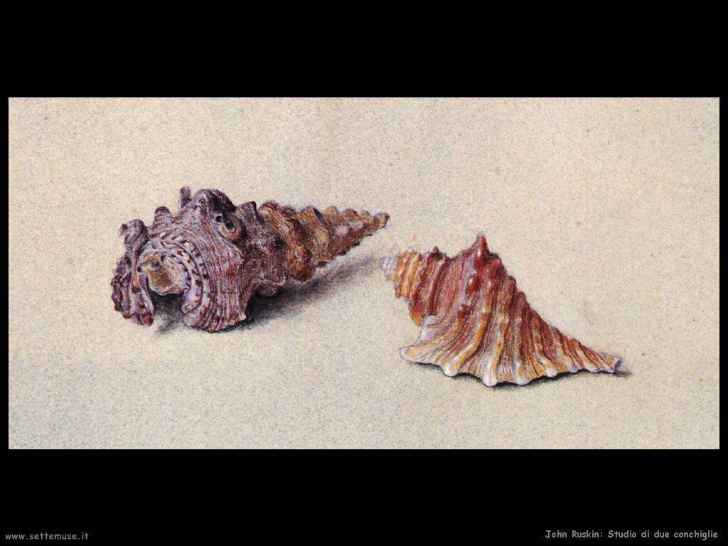john_ruskin_004_study_of_two_shells