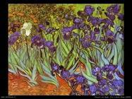 163_iris_a_saint_rémy_1889