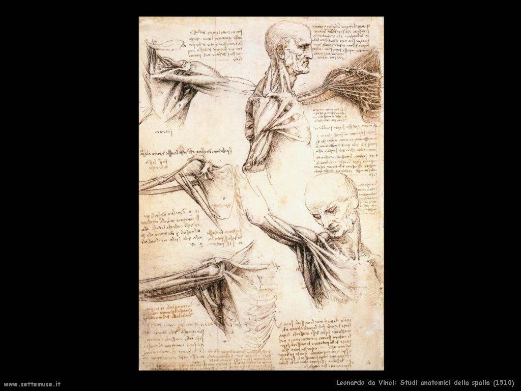 Studi anatomici della spalla (1510)