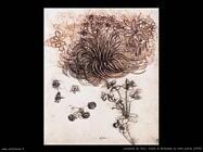 Stella di Betlemme e altre piante (1505)