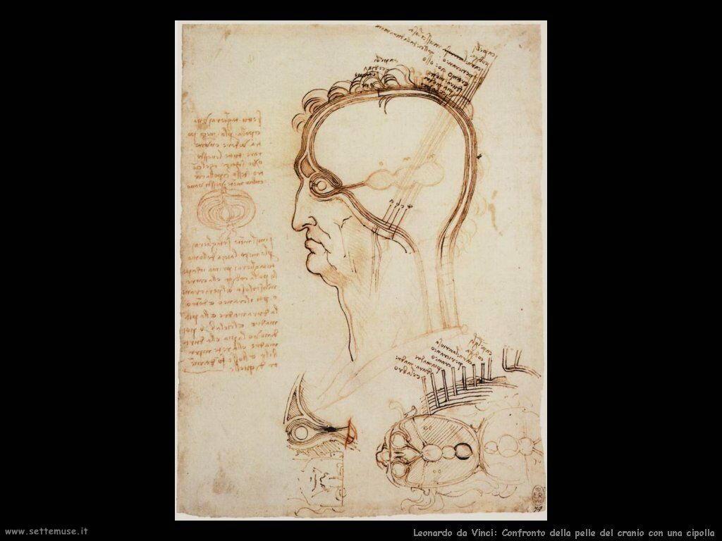 da vinci cranio umano