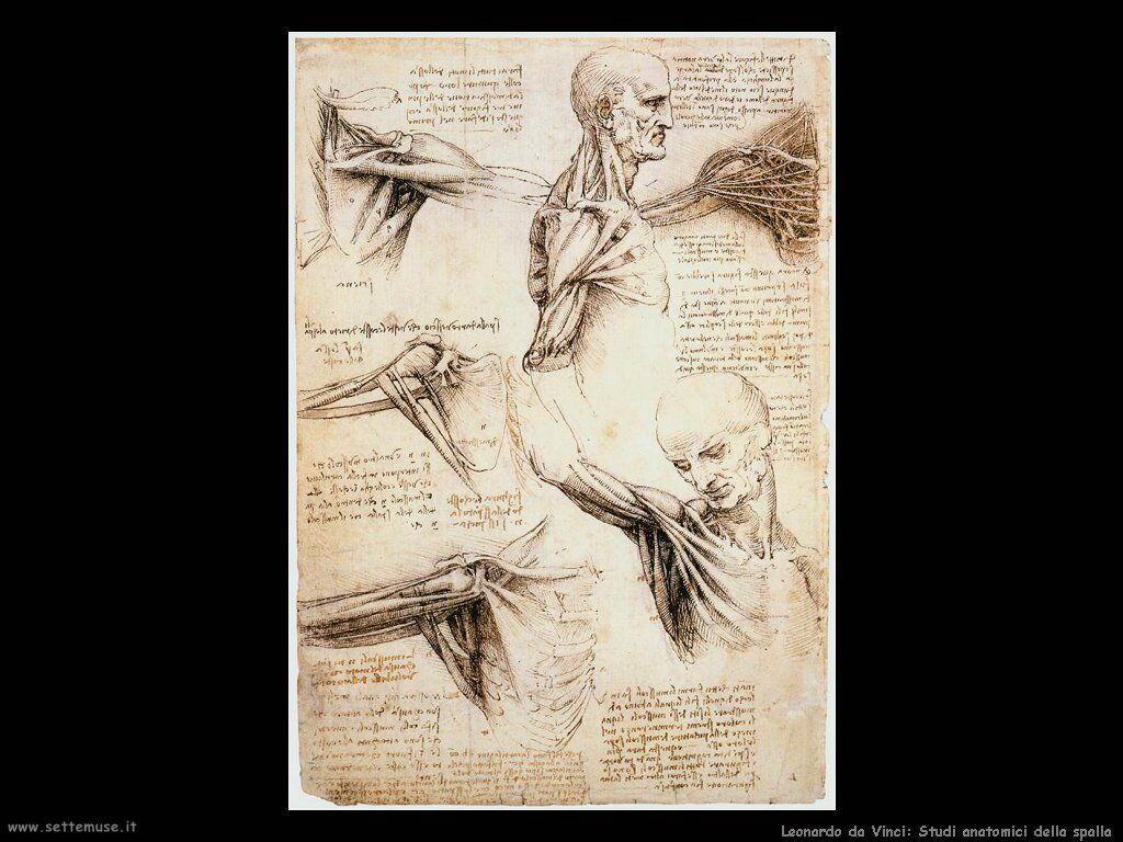 da vinci studi della spalla