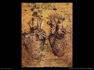 da vinci cuore e vasi