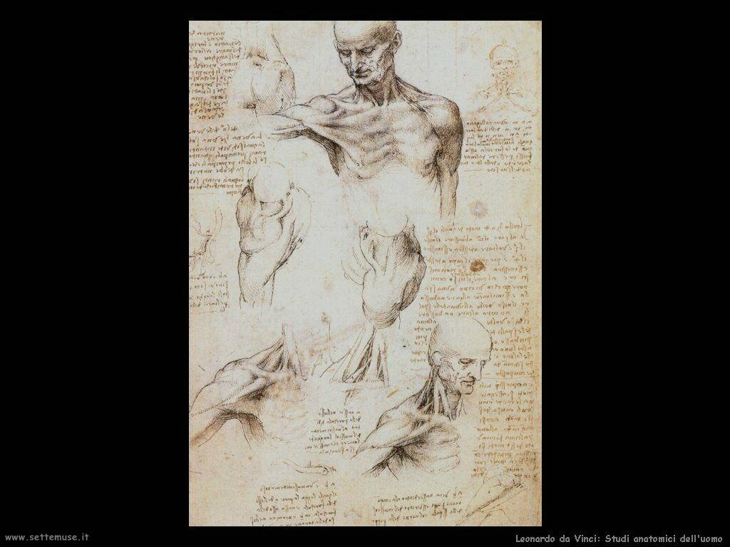 da vinci studi anatomici uomo