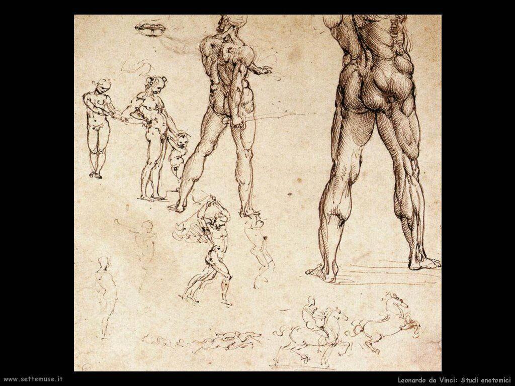 da vinci studi anatomici