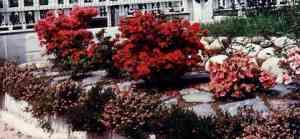 Rododendri ed eriche