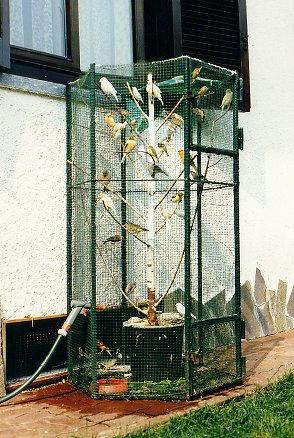 Nel seminterrato un locale ospita circa 50 uccellini di varie specie.