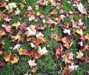 Attilio Bertolucci - Mattino d'autunno