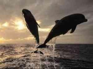 poesie ricky delfino e delfina