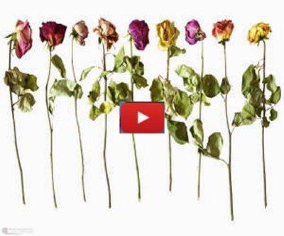 Poesia fiori secchi Spelta