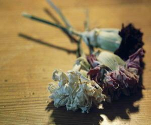 fiori secchi 2