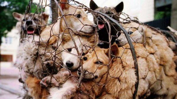 animali sofferenti