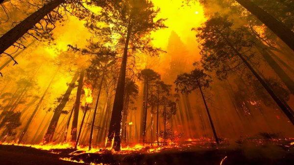 foreste scottanti