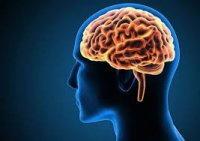 per un alieno il cervello