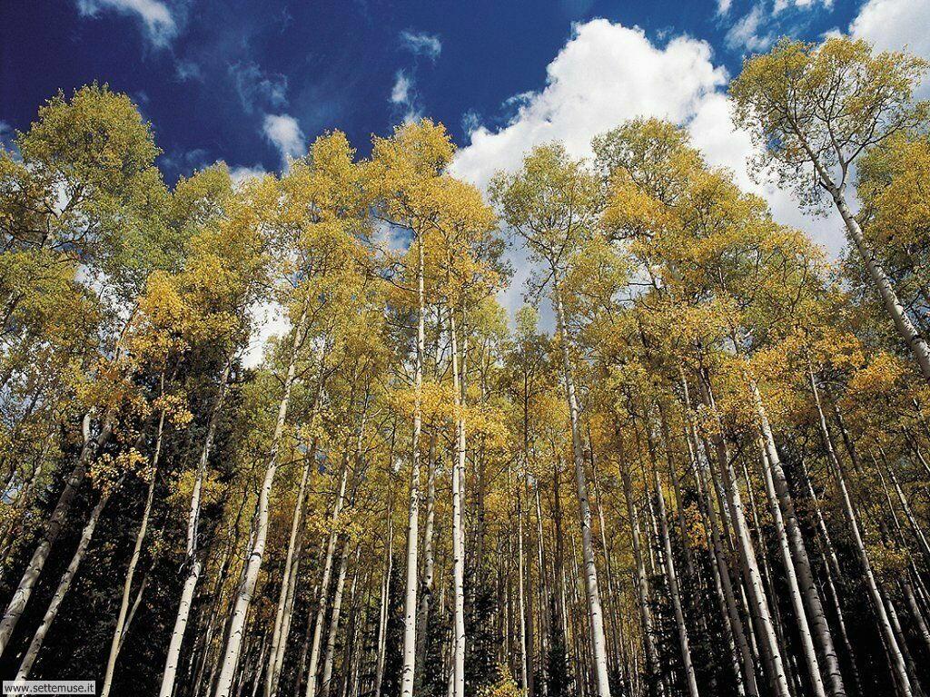 Foto desktop di boschi e foreste 001