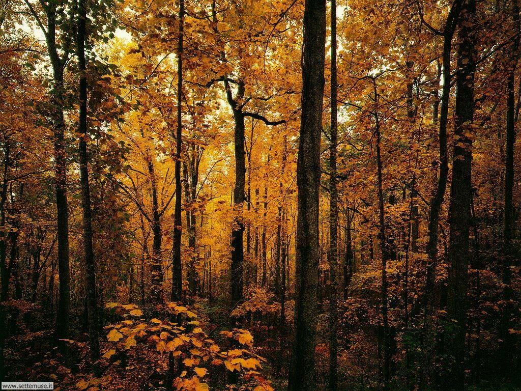 foto di boschi e foreste per sfondi