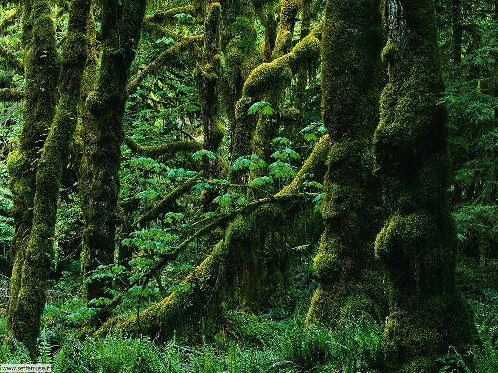 Foto desktop di boschi e foreste 003