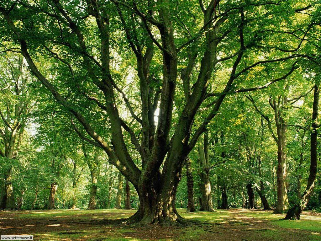 Foto desktop di boschi e foreste 005