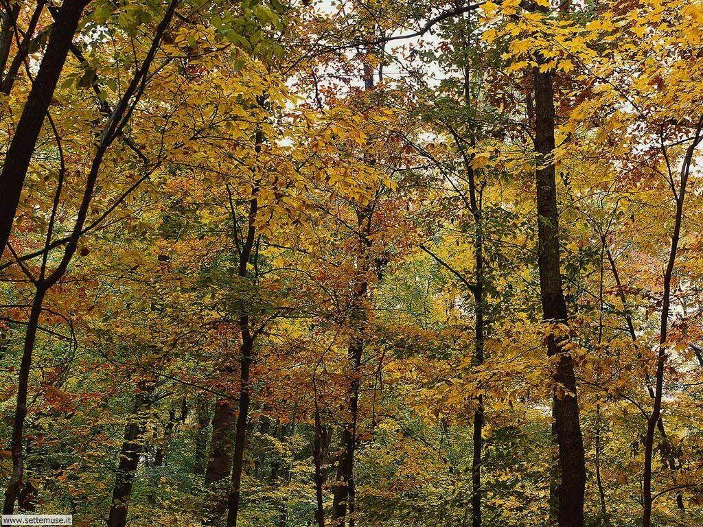 Foto desktop di boschi e foreste 006