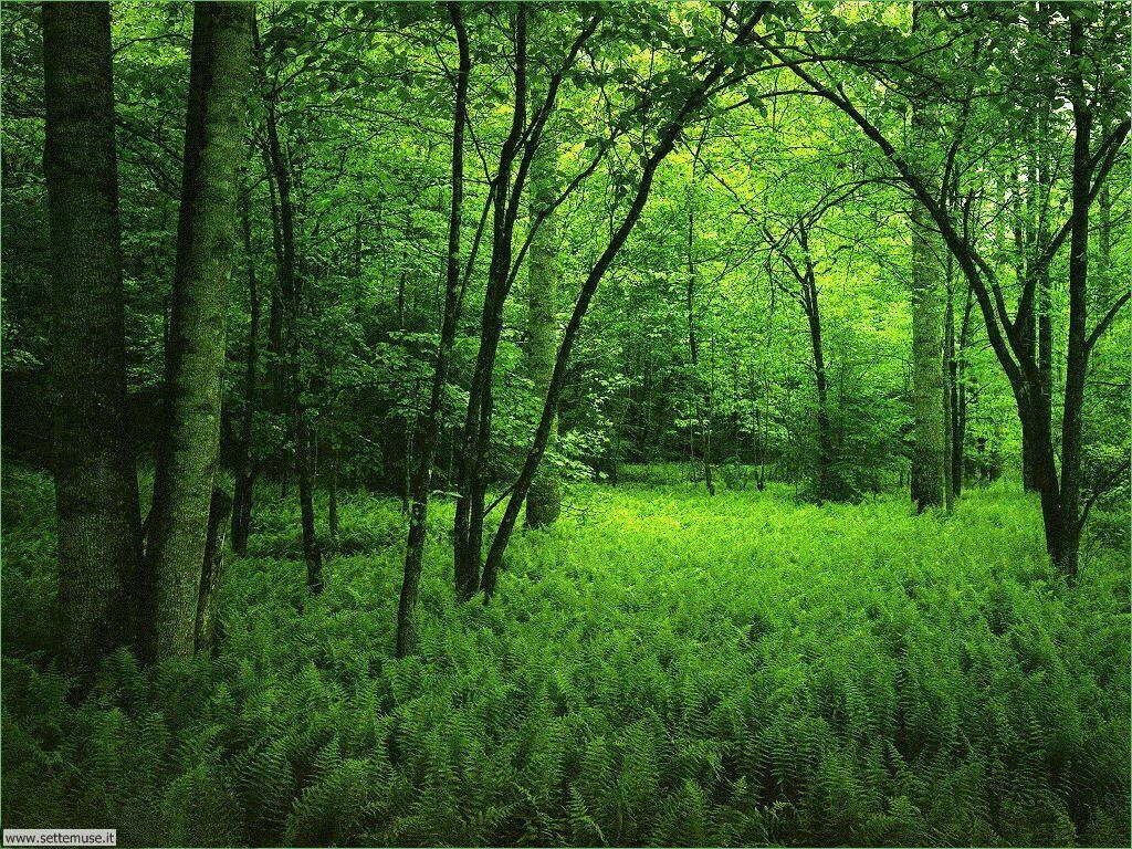 Foto desktop di boschi e foreste 007