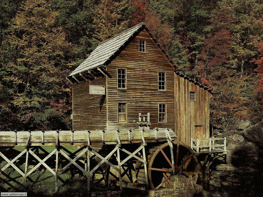Foto desktop di boschi e foreste 008