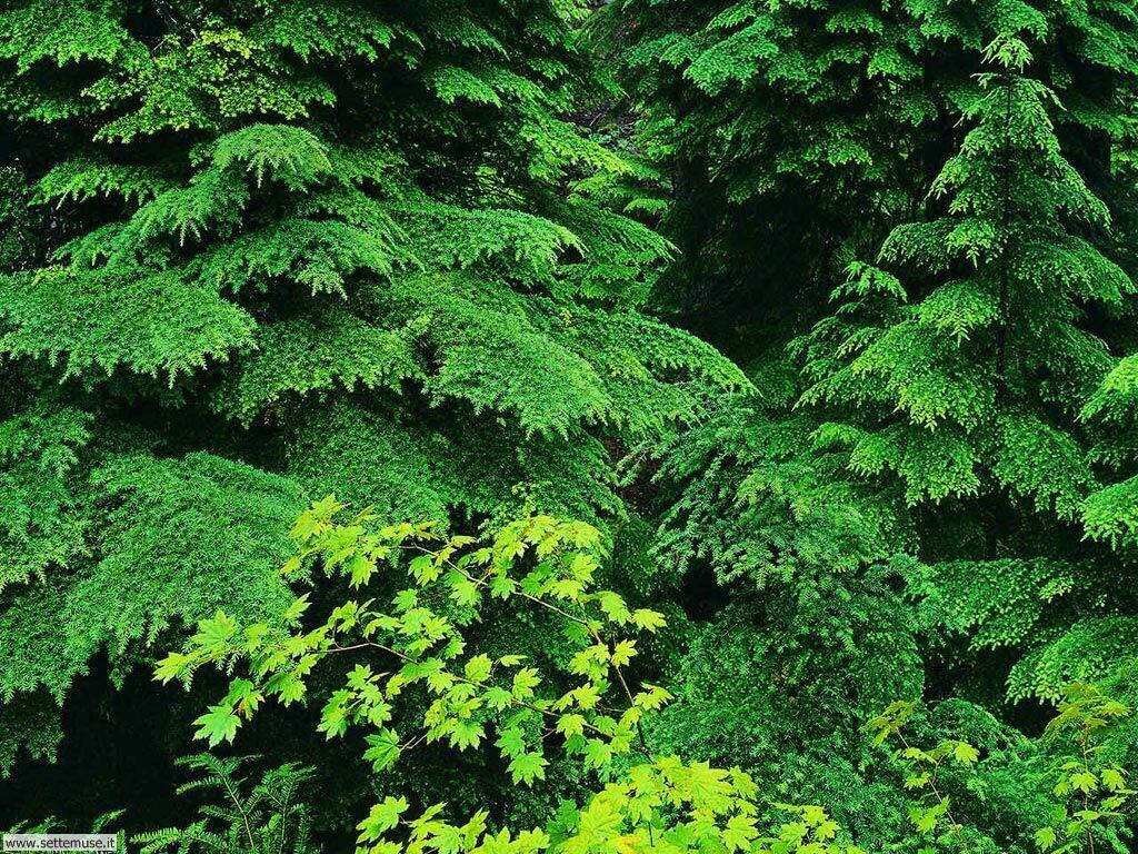Foto desktop di boschi e foreste 009