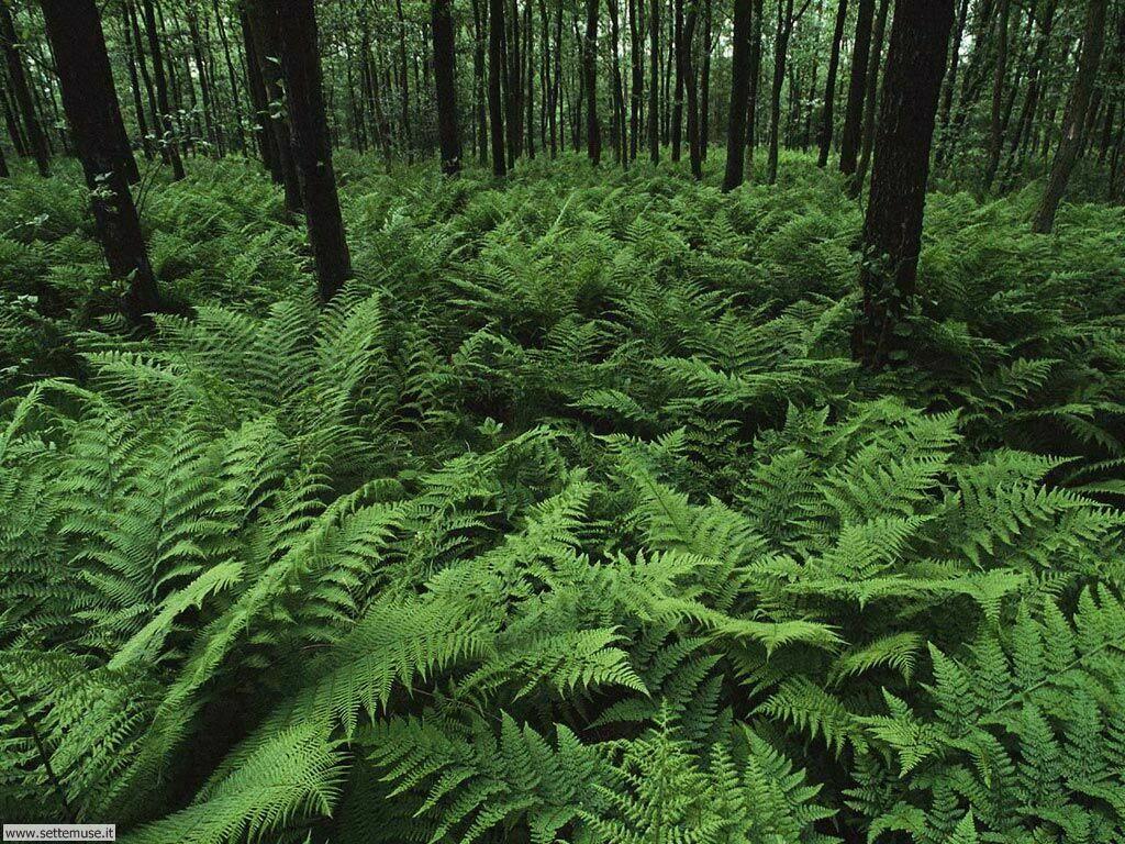 Foto desktop di boschi e foreste 012