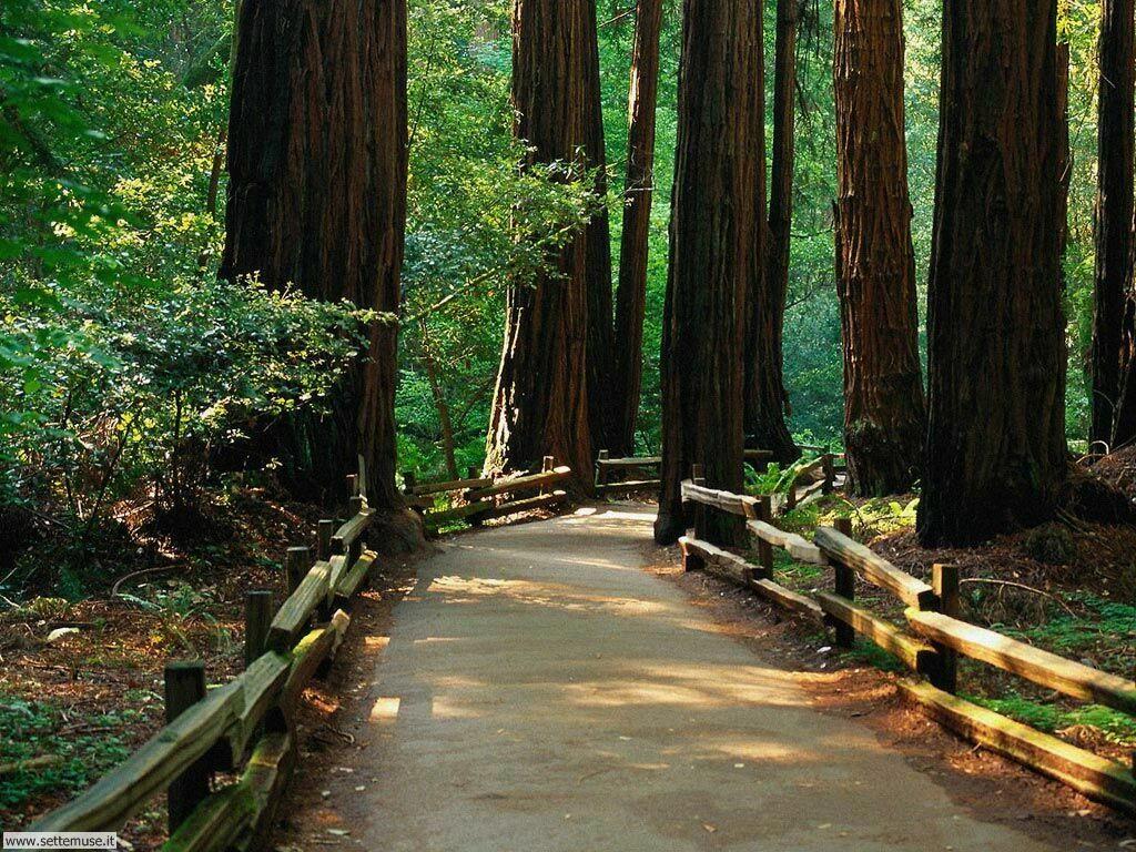 Foto desktop di boschi e foreste 013