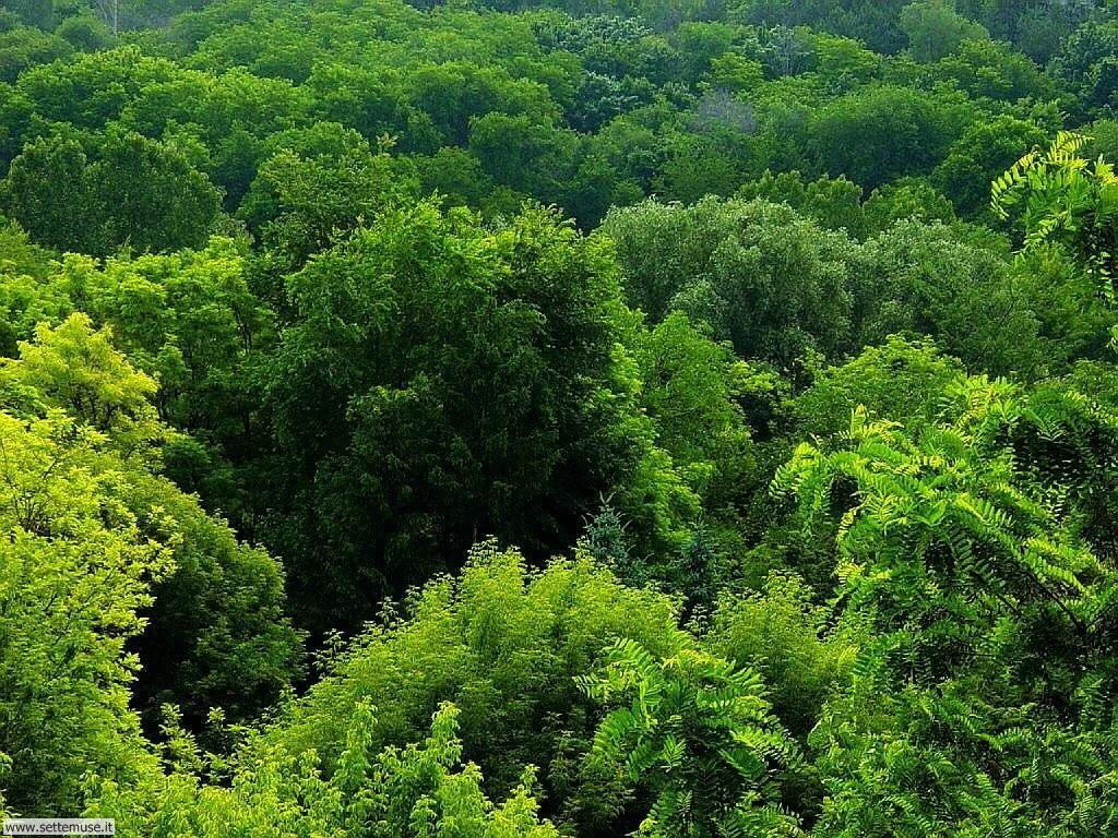 Foto desktop di boschi e foreste 014