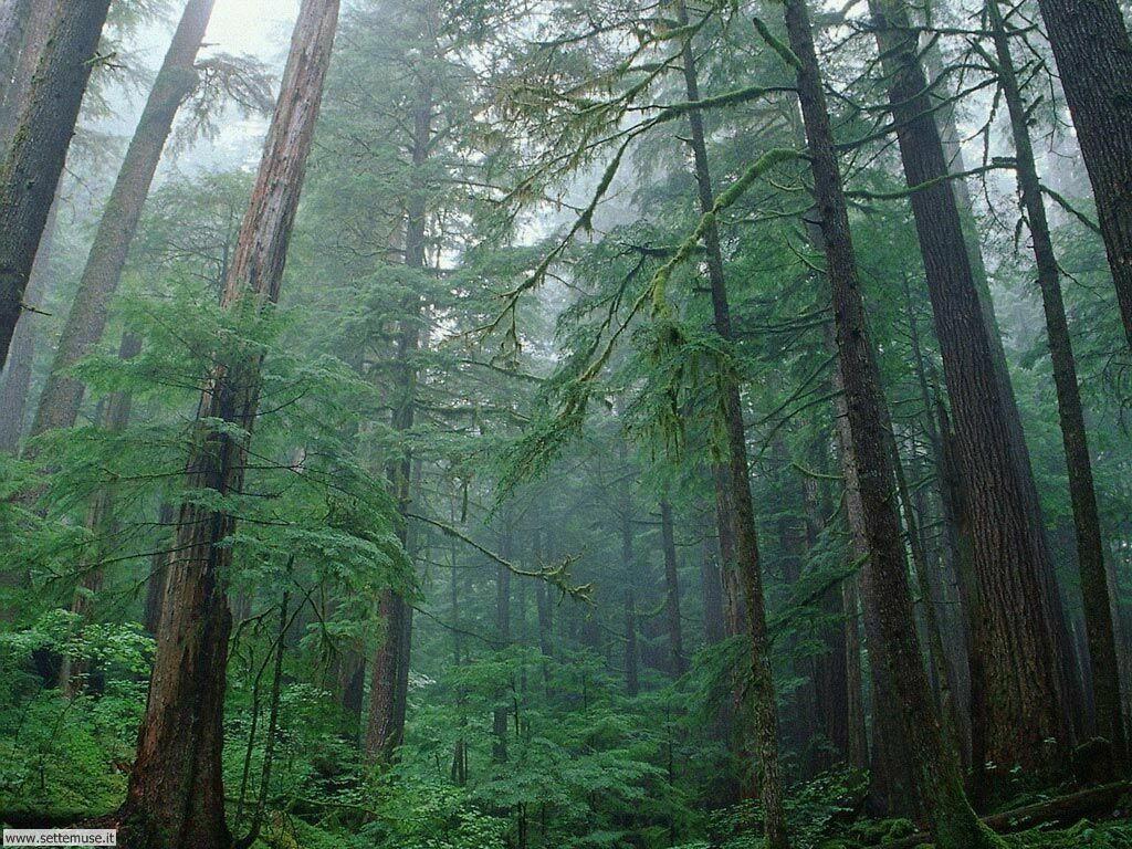 Foto desktop di boschi e foreste 015