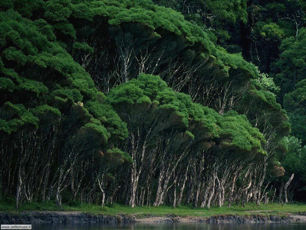 Foto desktop di boschi e foreste 016
