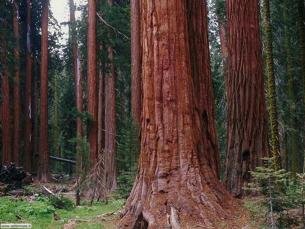 Foto desktop di boschi e foreste 017